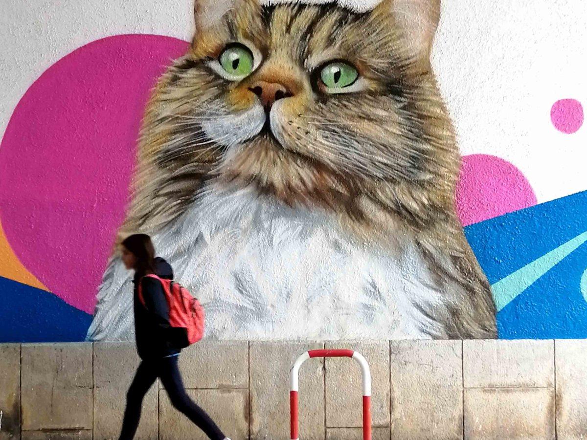 graffiti gato @miudo.arte