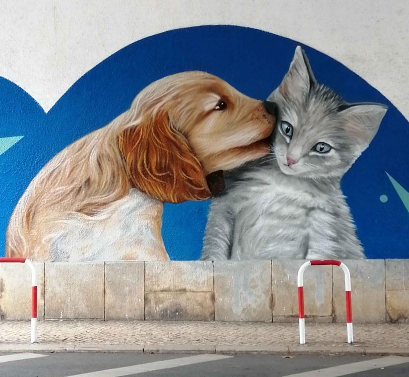 graffiti cão gato @miudo.arte